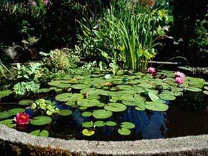 vodeni vrt