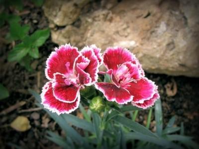 Godišnje biljke